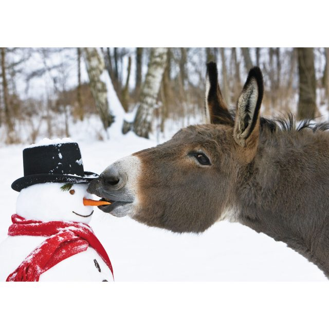 Donkey eating snowmans carrot nose charity Christmas card